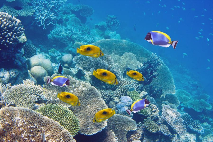 Pourquoi choisir l'Ile Maurice pour ses prochaines vacances